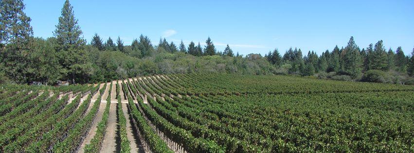 W H Smith Wines Napa Valley Passport